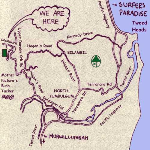 australian bush tucker survival guide